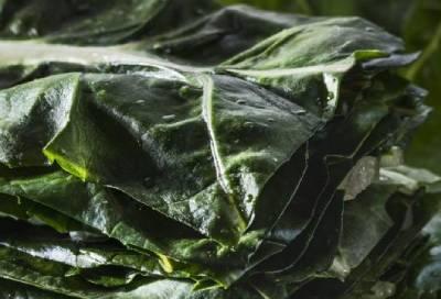legume fournisseur pro